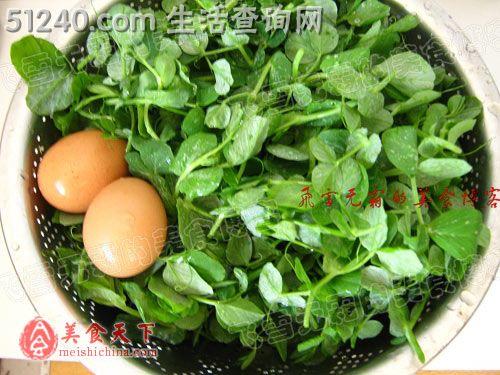 你可没吃过的菜谱苗炒鸡蛋-热菜菜谱-豌豆茭白晚上v菜谱可以吃吗图片